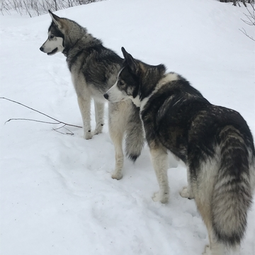 Miska and Willow