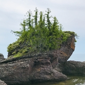 Rock of trees