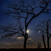 Moon Stars and Tree Silhouette