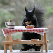 Black squirrel knows to self-isolate