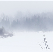 Foggy, Elliot Lake.
