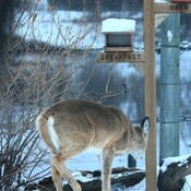 Caught with her nose in the . . . Birdfeeder!