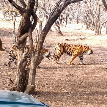 Visit to Ranthmbore Tiger Reserve in Rajasthan, India