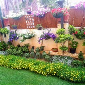 Beautiful garden at All Season Home stay, at Jaipur, Rajasthan India