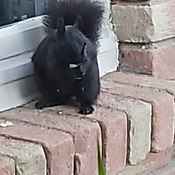 my squirrel having his breakfast.