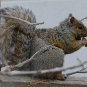 SNACKING SQUIRREL!