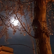 Super Moon lights up tree