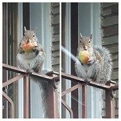 Squirrel eating a snack