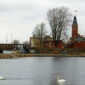 Dull Day in Belleville SwANS can brighten ones day be safe