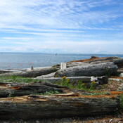 Beach-walk drift-wood, White-Rock BC