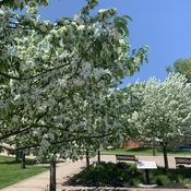 Port Perry in Bloom