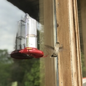 Spending the morning with the hummingbirds
