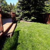 Backyard grass making a comeback