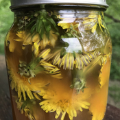 Infused Dandelion vinegar