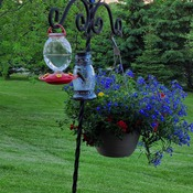 Hummingbird in Caledon