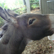 Donkey Shows affection