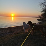 Pups enjoying the Oak Lake sinset!