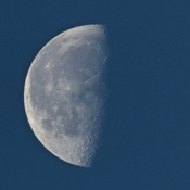 This morning's almost last quarter moon