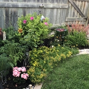 My backyard flower garden haven