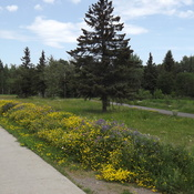 BIKE and WALKING TRAIL with a FLOWER BORDER