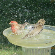 Bird splash party