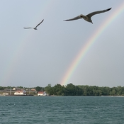 Two Seagulls and two Rainbows