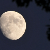 July evening moon