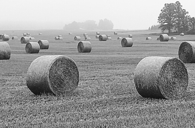 B&W Hay Field Forest, ON
