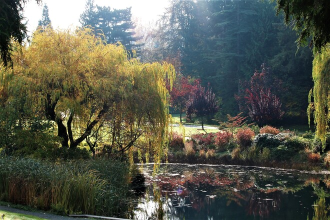 Weeping Willow 1975 Isherwood Ave, Shawnigan Lake, BC V0R 2W3, Canada