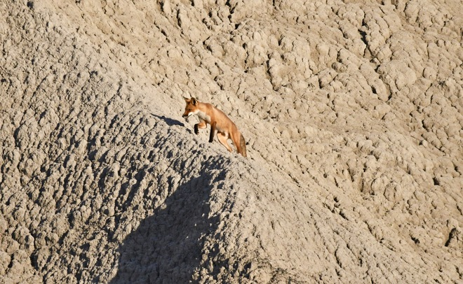 FOX TROT at BLUFFER'S Scarborough Bluffs, Bluffers Park, Scarborough, ON