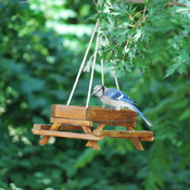 Our friend BlueJay