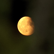 Corn Moon Through the Swedish Aspens