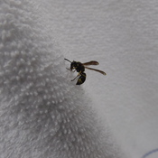 WASP doing EXERCISES