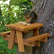 Squirrel Feeder Picnic Table (The Stellar Jay's love it too)
