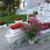 Lovely planters in front garden