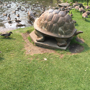 Wow! Now that's a turtle in James Gardens