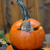 Happy Fall from Chippie.