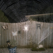 Spider and Web at Night