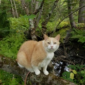 Cougar Kat Goes For A Hike.