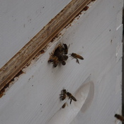 BEES at WORK
