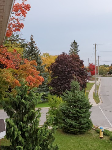 Amazing Fall Colors Campbellford, ON