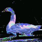 psychedelic goose