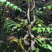 Chain linked vegetation