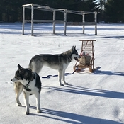 Willow and Miska at Garden Pow Wow grounds