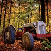 Fantastic fall ford 8n