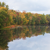 Trees changing colours along the Moira River