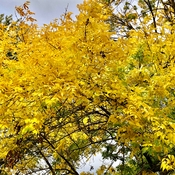 Autumn yellow!!