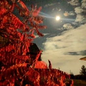 Harvest Moon and Sumac Tree