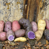 Unusual Spuds.