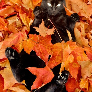 Amy in the leaves 😸